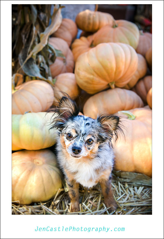 Fall Portraits with the {jcp} family, Pet Photography